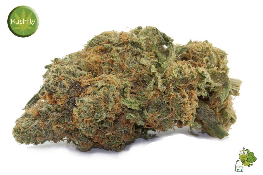 purple marijuana bud 28 - photo #8
