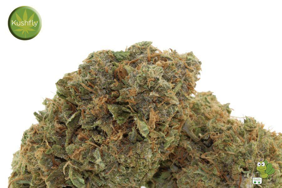 purple marijuana bud 28 - photo #6