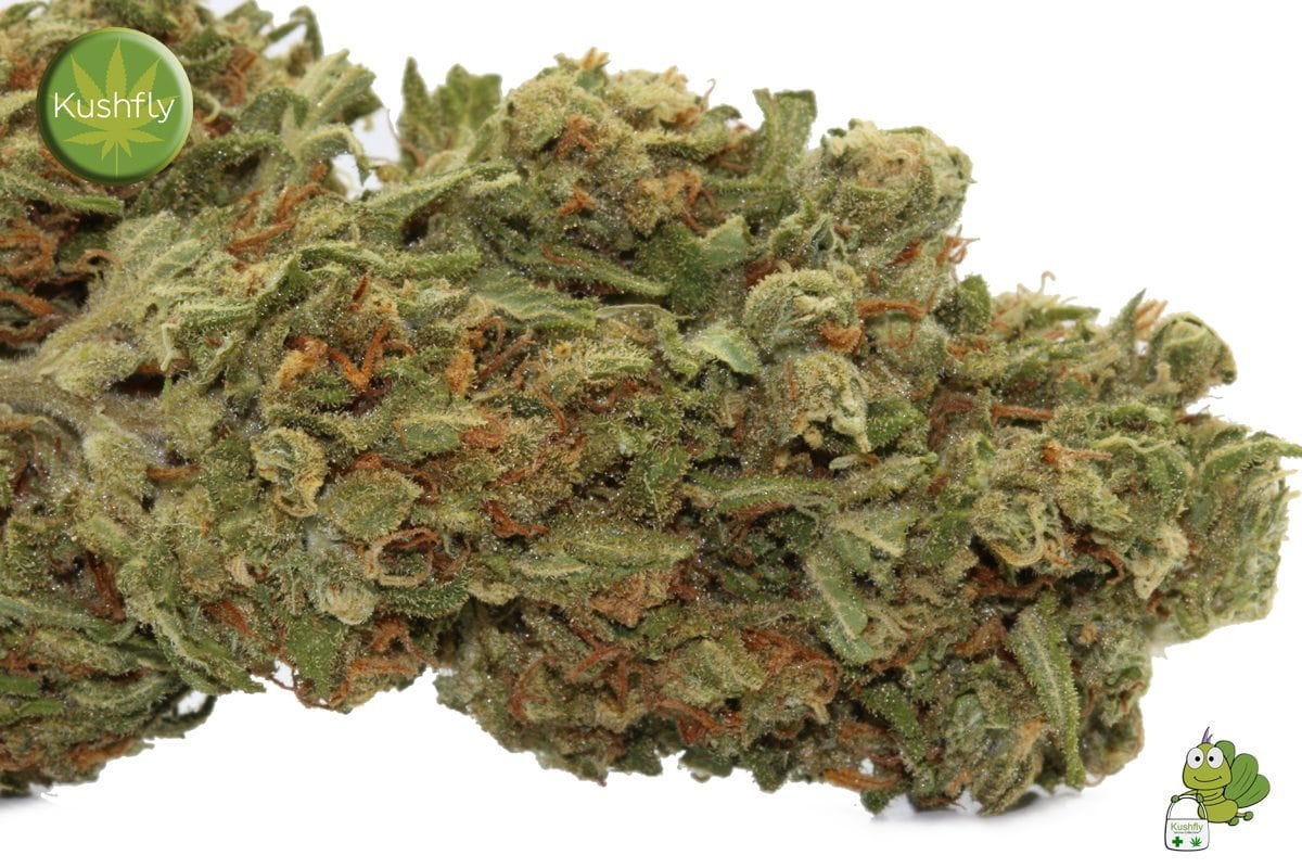 Pineapple Express Strain Cannabis Delivery and Information Kushfly