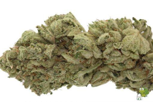 Super Glue Cannabis Strain