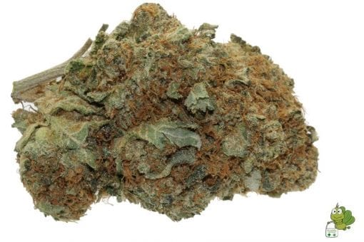 King Louis XIII Medical Marijuana Strain