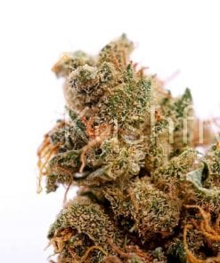 Dutch Treat Cannabis Strain