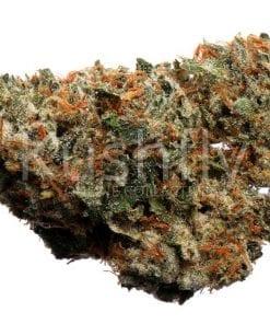 Wifi Cannabis Strain