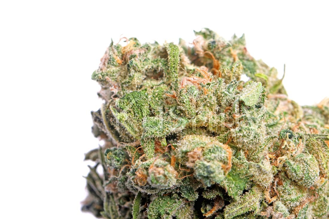 Blue Dream Strain Cannabis Delivery and Information - Kushfly com