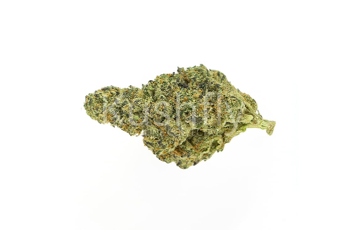 Girl Scout Cookies Strain Cannabis Delivery Information Kushfly Com