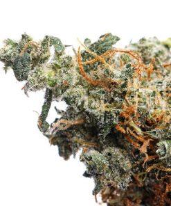 Super Jack Cannabis Strain