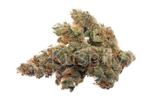 24k Gold Cannabis Strain