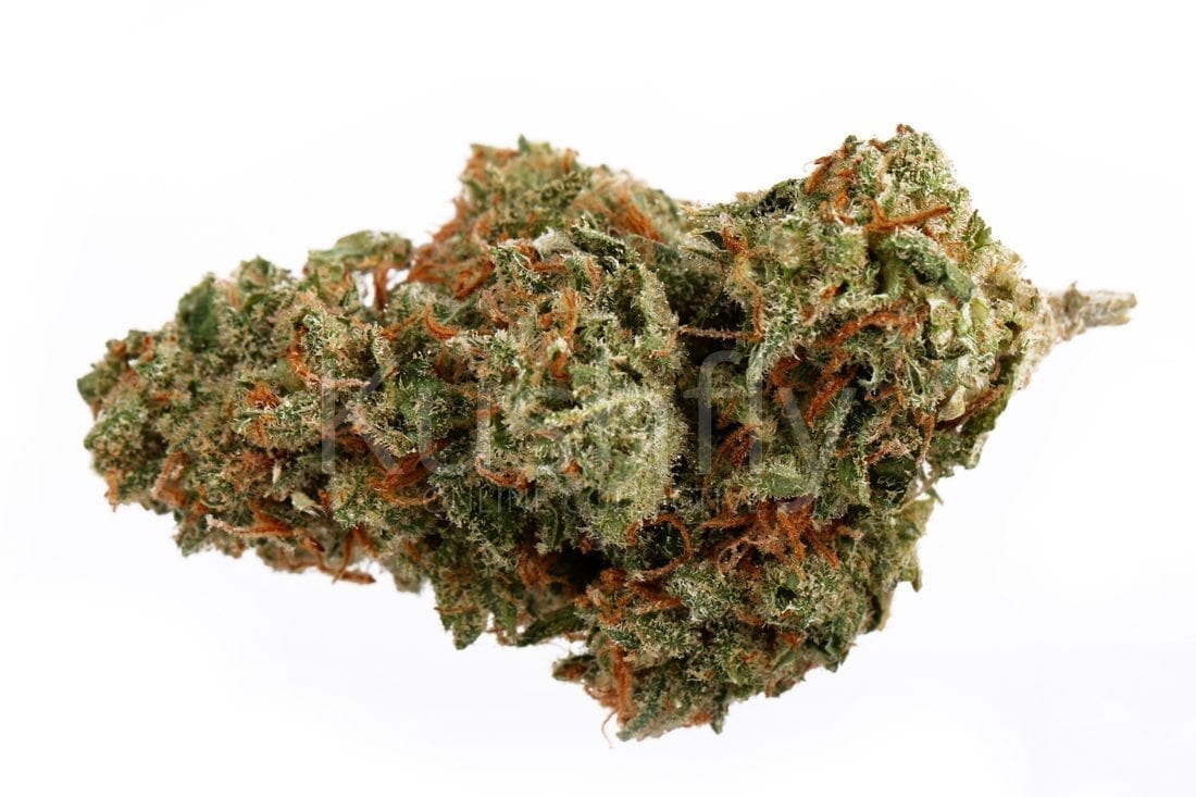 Candy Jack Strain Marijuana Delivery And Information