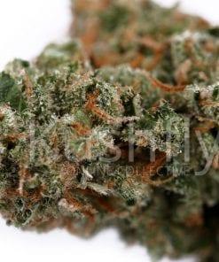Candy Jack Cannabis Strain