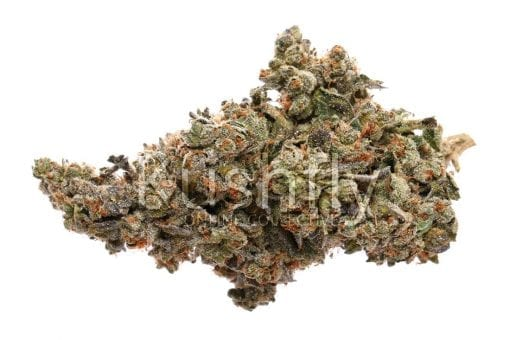 Candy Land Cannabis Strain