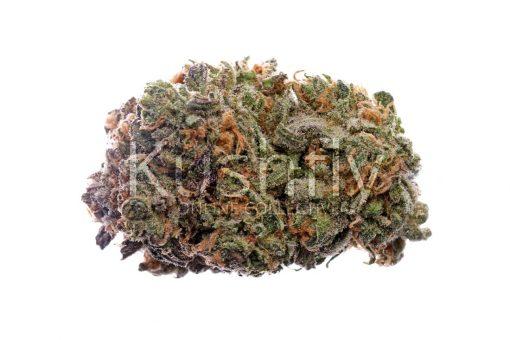 Champange Blue Dream Cannabis Strain