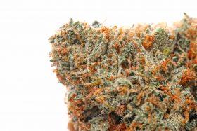 Madman OG Cannabis Strain