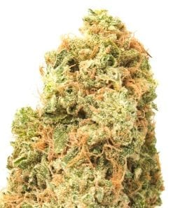 KNBIS Watermelon Zkittles Marijuana Delivery