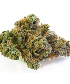 Order Blueberry Dream Online