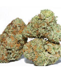 Order Hash Plant Marijuana Online