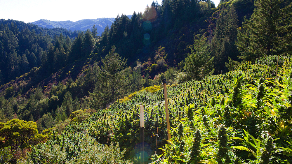 Why Is Humboldt County So Famous?