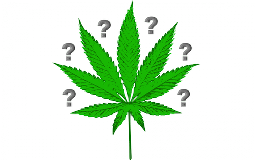 7 Of Your Cannabis Questions Answered