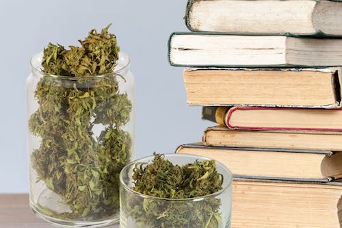 The Best Cannabis Strains For College Aged Consumers