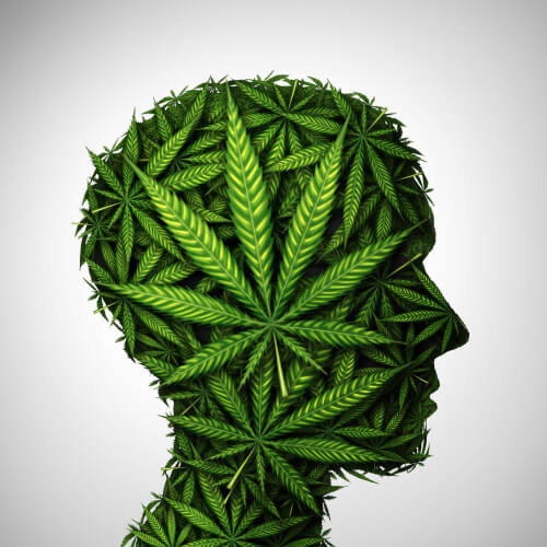 What Cannabis Does To Our Brains