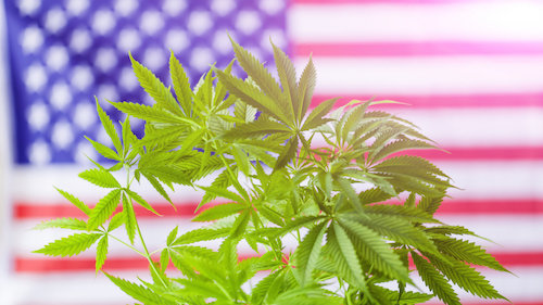 The Best Strains For Watching The Democratic Debates