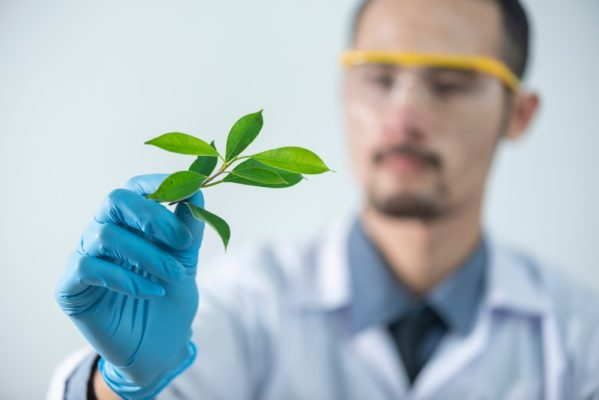 U.S. Is Leading In Cannabis Research Studies