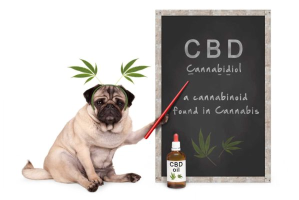 CBD Therapy for Dogs